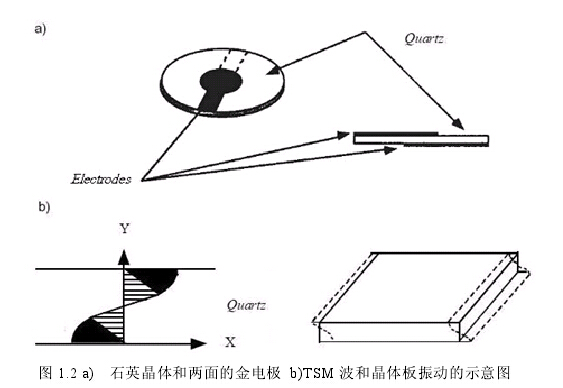 压电生物传感器是近20年来发展起来的一种新型生物传感器,它主要是利用压电石英谐振器对质量的敏感性,通过监测谐振器吸附待测物后频率的变化来检测待测物。这类传感器最大的优点是不需要任何标记,且仪器简单、操作方便,具有响应灵敏、选择性好、便于自动化等优点,因此引起了人们的浓厚兴趣,成为生物传感器领域的研究热点之一。 压电效应 压电效应(Piezoelectricefect,Piezo源自希腊文,意为加压)实际上是一种机电耦合效应,即晶体受外界机械压应力的作用,在其表面产生电荷的现象。相反,在晶体极化的方向上施